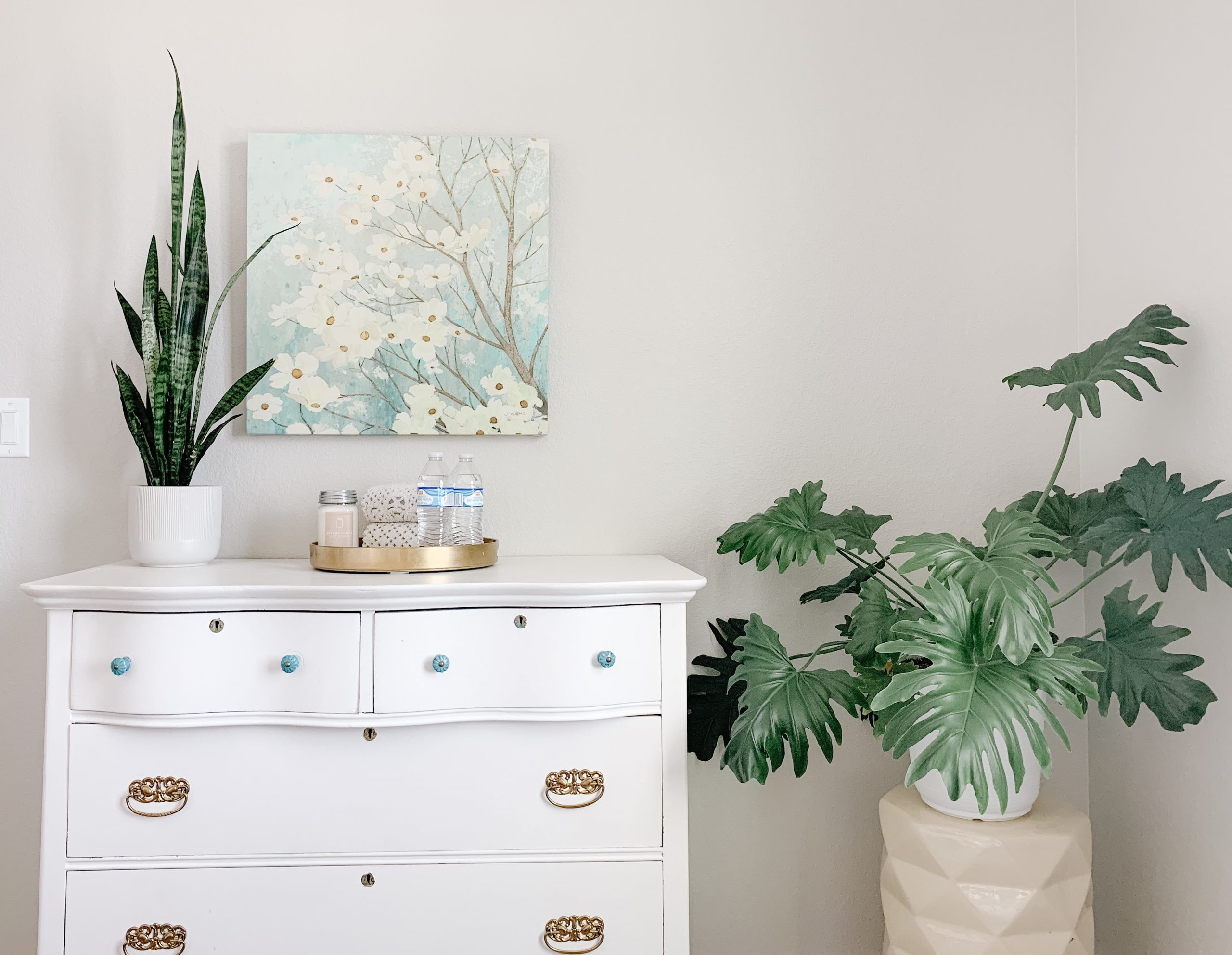 Monstera is a great easy houseplant for beginners