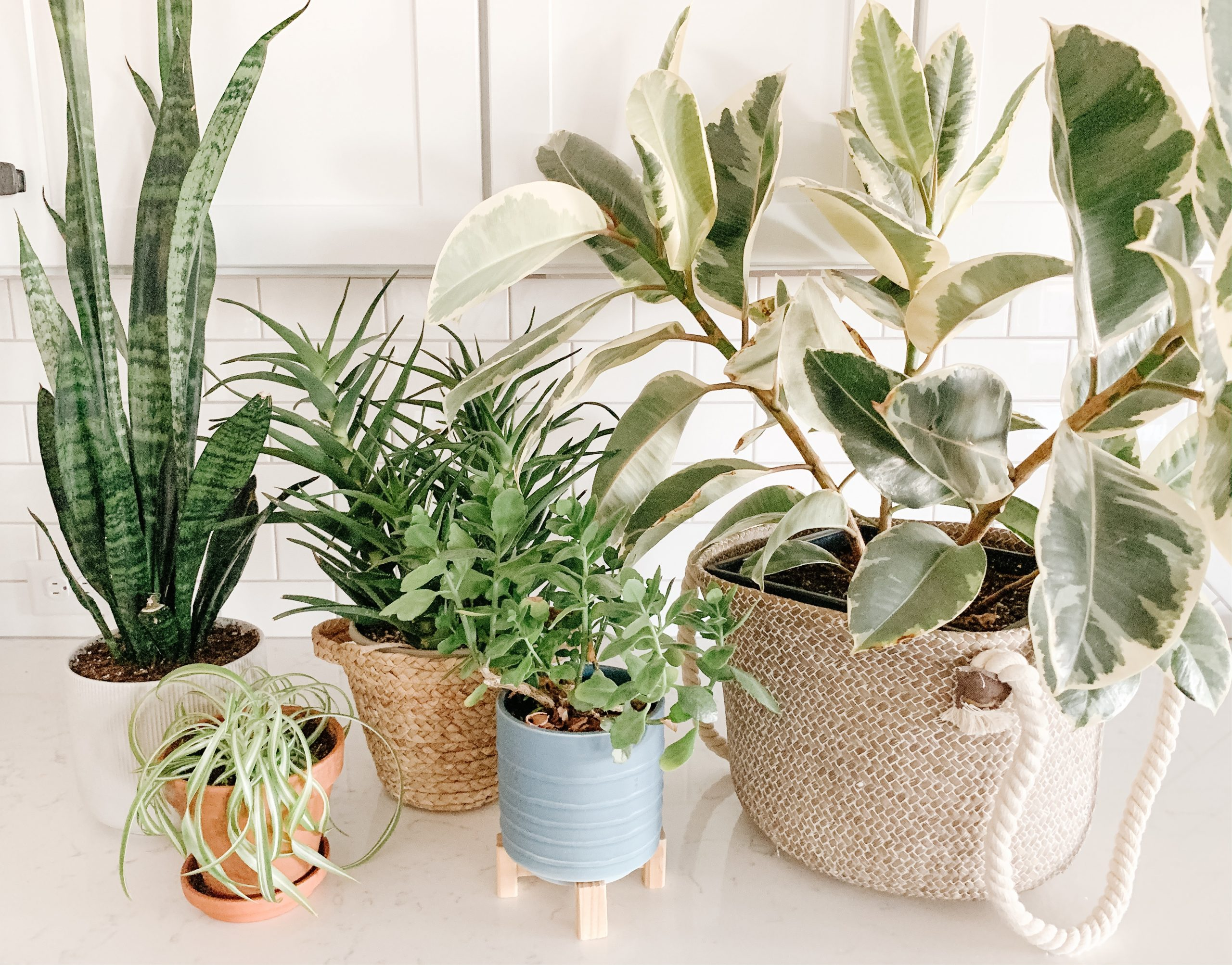 All About Plants! Part 1