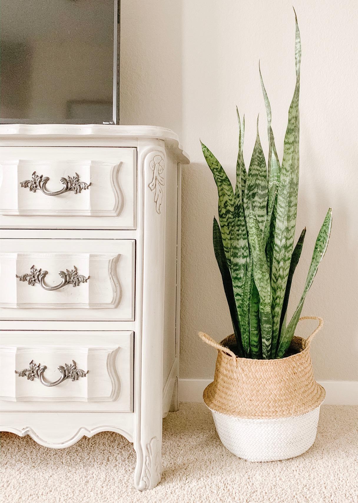 snake plant in a basket