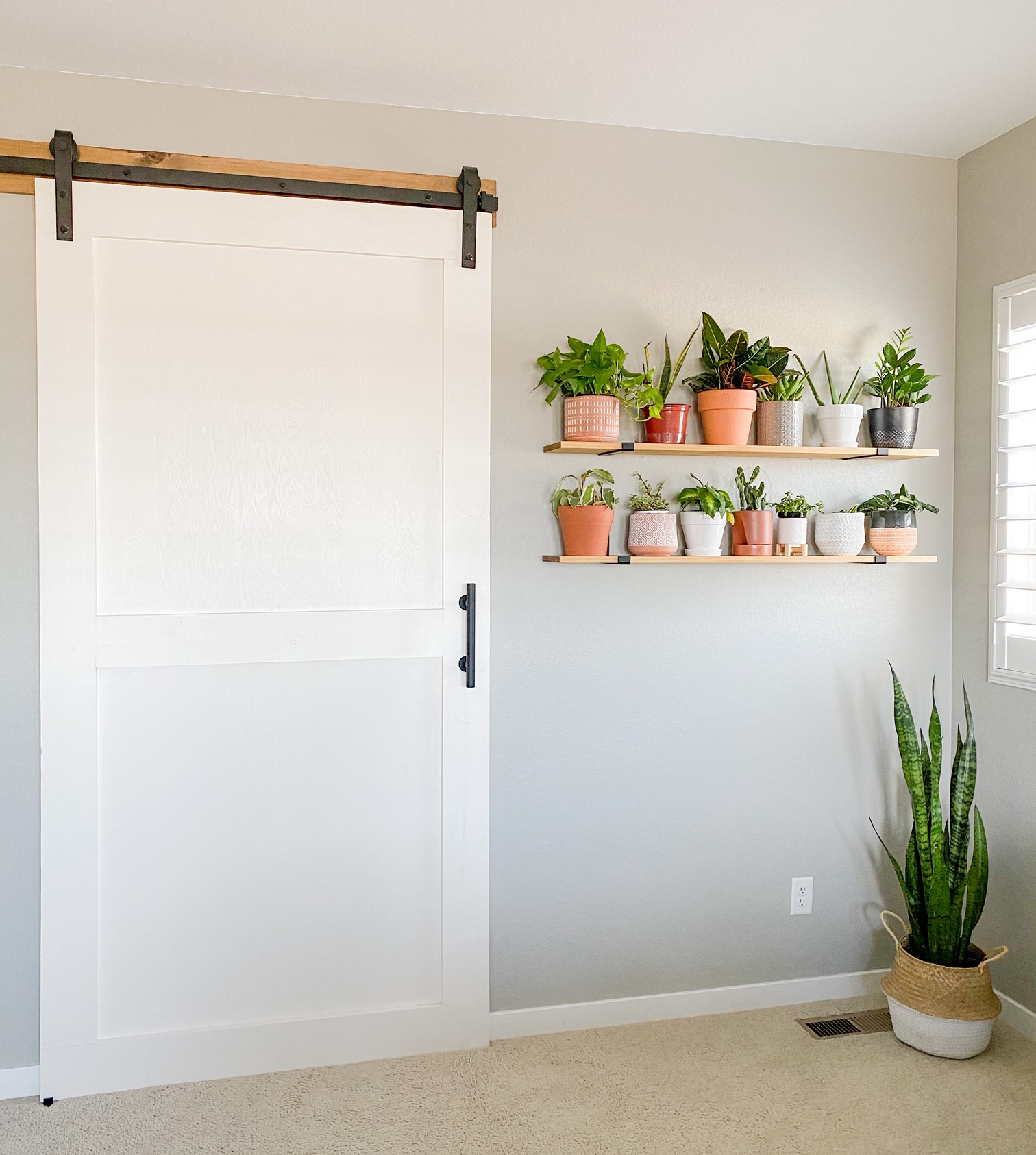 Barn door with a plant shelves wall