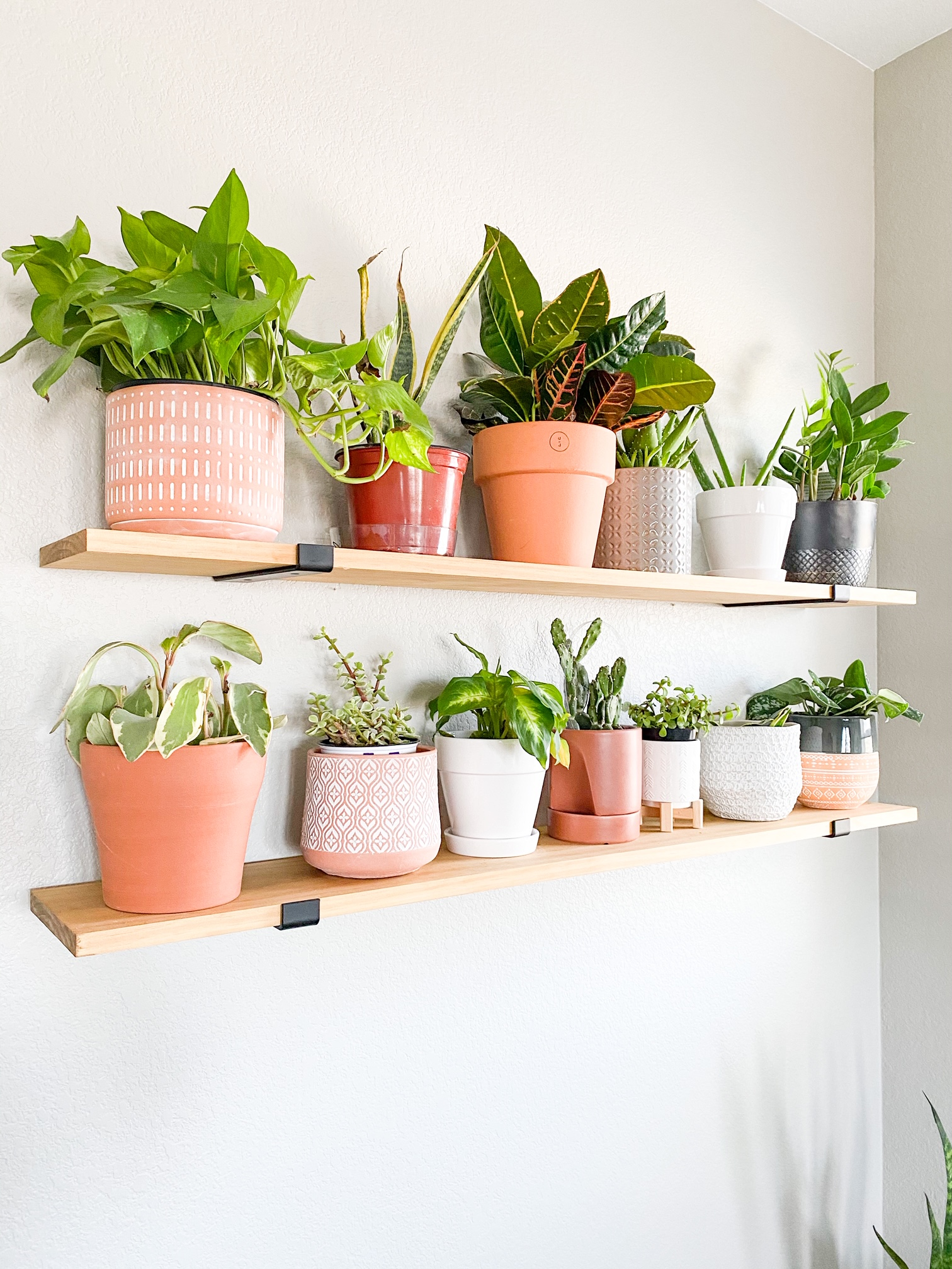 plants in different pots on floating shelves